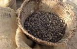 女人的保養護膚法寶——乳油木,非洲產出的乳木果油成就了護膚品