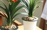 大多數人不知道,家裡放上這些植物,對家人身體好,養人還不貴
