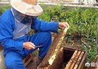 飼養蜜蜂的白糖水如何配製?