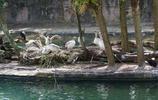 穿越四季的美帝遊記——北卡,佛羅里達