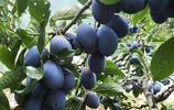 現在流行這樣吃水果,綠色安全又健康,性價比極高,放陽臺特合適