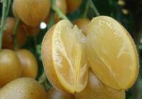 黃皮是什麼水果?
