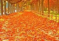 散文詩:秋之歌