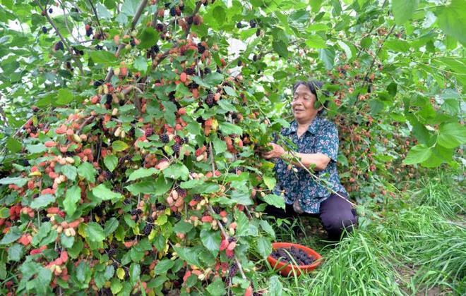 """新疆天然""""鹼性物"""",因廉價被人輕視,秋天多吃,比吃牛羊肉健康"""