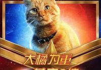 《驚奇隊長》裡的橘貓 原來才是這部電影的主角