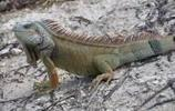 動物圖集:蜥蜴