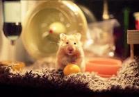 寵物篇-倉鼠5:倉鼠的牙齒