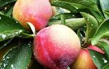 這幾款超有營養的水果樹苗,在家也能種,半年就結出果實,還方便