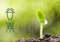 """今日穀雨,農諺""""穀雨有雨兆雨多,穀雨無雨水來遲""""啥意思?有道理嗎?"""
