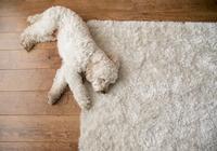 狗狗常見十種皮膚病,它們分別有什麼特徵,主人該如何辨別是哪種