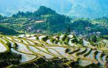我國華東地區最大的梯田群,開發於唐朝,網友:中國最美沒有之一