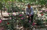 74歲老人買2畝垃圾場建百花園,村民挖苗摘花吃菜全免費他圖啥?