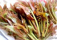 香椿的營養價值
