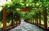 葡萄溝,一處幽靜的避暑、觀光、旅遊勝地