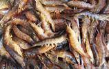 新鮮海鮮出現在菜市場 鮮活難得 市民扎堆購買 蠣蝦25元 筆管35元