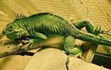 動物圖集:蜥蜴美圖