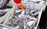 """來了就""""黏""""腳  實拍青島早市海鮮琳琅滿目 大蝦70一斤 黃花魚16"""