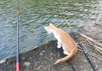 秋冬交接之際魚口輕,教你三招,寒冬也能讓魚兒大開口
