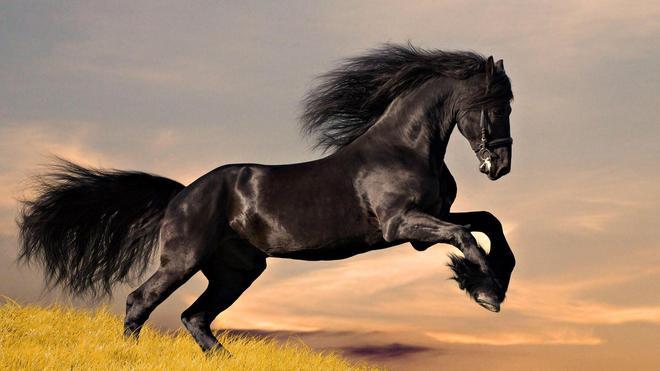 動物圖集:奔跑的動物
