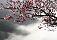 陽春四月的花海林州