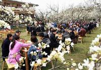 廣元市鄉村文化旅遊節暨第十三屆蒼溪梨花節在蒼溪舉行