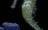 深海中的寶馬 水族一組