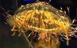 盤點世界各地的美麗水母