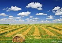 資深農業經理人給投資農業和創業農業的朋友潑潑冷水