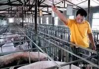 影響豬呼吸道病的因素及防控方案