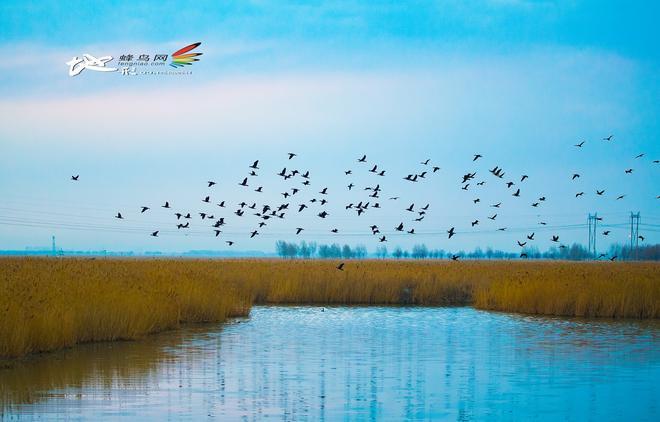 圖蟲風光攝影:美麗大慶 生態大慶