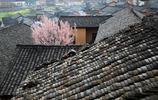 古樸山村春意濃,桃花梨花爬牆頭,這是人們最想去賞春的地方