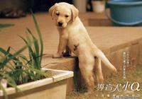 導盲犬小Q的一生