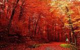 絕美紅葉觀賞地 盤山