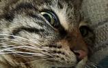 這隻貓完全是北影畢業的嗎?真是活生生的表情包,太逗了!