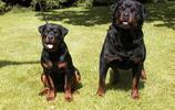 旅遊發現厲害的十大猛犬