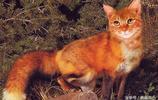 6種擁有奇異樣貌的動物,第4種已經在地球上滅絕