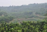 農業知識:桔子的種植過程,看完覺得農民真不容易