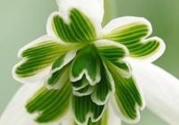 五顏六色的奇異花朵又來了!保證你沒見過!
