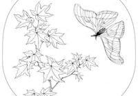 50張花卉高清線稿,適合臨摹學習,喜歡白描和黑白插畫的收藏