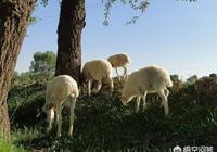 你如何看待在別人家地裡放羊,結果羊被毒死的事兒?到底誰該負責?