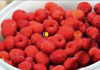 野草莓也可以做酒嗎?野草莓酒喝的是童年的味道!