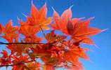 紫塞旅遊:四川青川縣福澤苑賞楓葉的最佳這個週末就走起