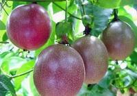 """這個水果的營養,頂一框水果,被稱做""""水果之王"""""""