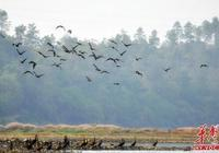 衡南縣:青山綠水景美 愛鳥護鳥成風