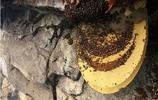 《80歲喜馬拉雅懸崖上的採蜜人:帕巴》為了生活,太讓人傷感了