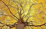 罕見的樹,美到讓你無話可說