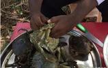 看三哥是如何糟蹋螃蟹的,沒有蟹黃的螃蟹不是好螃蟹