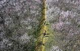 西安:明王陵百餘畝網紅桃花開始綻放 風景美麗迎遊客