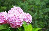 揚州最有名的花——瓊花