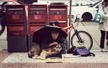 10張乞丐與狗的溫馨照片,看完心都暖化了